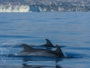 Delfini e balene (1)